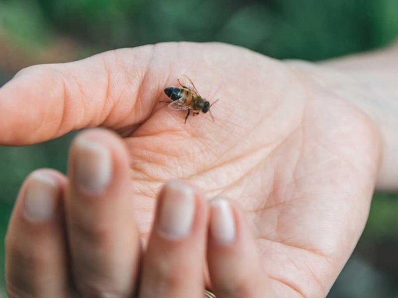 درمان های خانگی نیش زنبورعسل را بشناسید